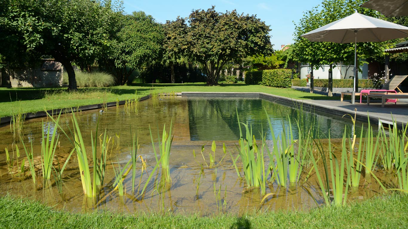 Realizzazione biolaghi balneabili a Caluso - Chagall Giardini